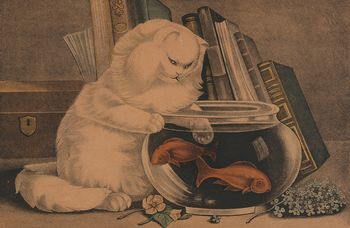 Digital Image of a Cat Fishing in a Goldfish Bowl #oJYlCYMo4Ik