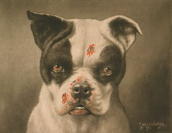 Digital Image of a Tough Dog with Bloody Scratches #5oTAYdA3L2o