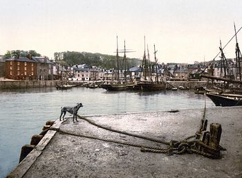 Digital Photo of a Dog at the Padstow Quay Cornwall England United Kingdom #9LndRoNOA20
