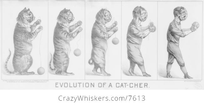 Evolution of a Cat Cher - #vFn0fzNa5dc-1