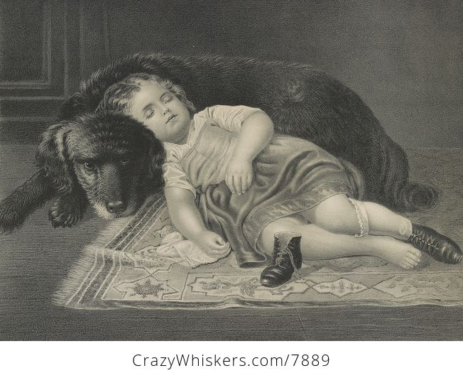 Vintage Digital Image of a Tired Girl Sleeping Against Her Dog C1872 - #a3znw8ZEWT8-1