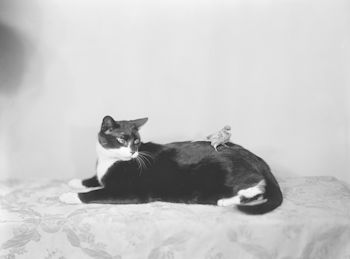 Vintage Digital Image of a Canary Bird on a Tuxedo Cat #DkEdBKUSgNs
