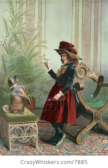Vintage Digital Image of a Girl Holding up a Treat and Training Her Pug Dog - #zwxAOjspzJ8-1