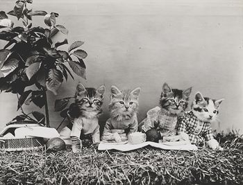 Vintage Digital Image of a Group of Kittens Having a Picnic #UyFtjPhXl3Q