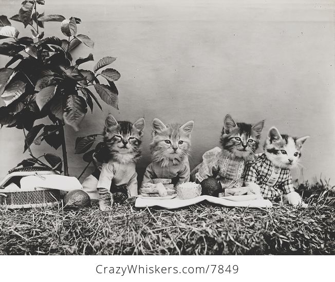 Vintage Digital Image of a Group of Kittens Having a Picnic - #UyFtjPhXl3Q-1