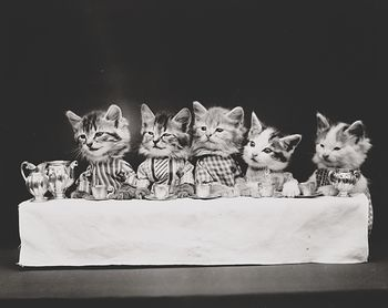 Vintage Digital Image of a Group of Kittens Having Tea #M49IjbR2Slw