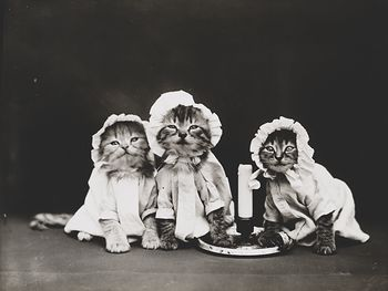 Vintage Digital Image of a Group of Kittens in Pjs Around a Candle #bgLscWUwz4Q