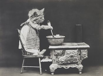 Vintage Digital Image of a Kitten Cooking on a Stove #eUdvU74chuc