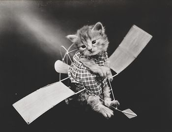Vintage Digital Image of a Kitten on a Toy Glider #zd9K6xEZxmU