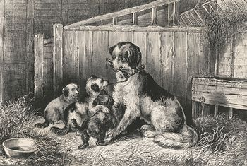Vintage Digital Image of a Mamma Dog Playing with Her Puppies C Between 1872 and 1874 #Efmn6AUL6Nk