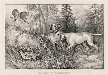 Vintage Digital Image of a Pair of Dogs Hunting Partridges C 1870 #9tzrFTdmXKY