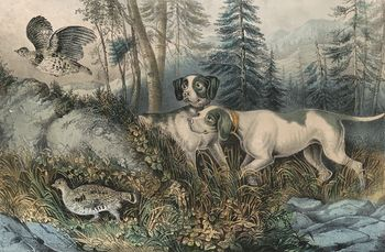 Vintage Digital Image of a Pair of Dogs Hunting Partridges C 1870 #FoVtLxjvhq8
