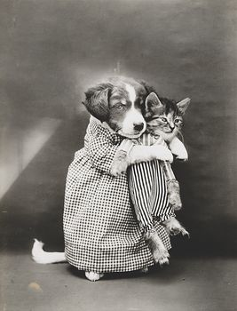 Vintage Digital Image of a Puppy Holding a Kitten #E73nAcUzEi0