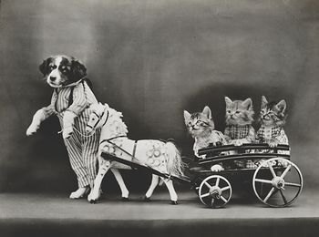 Vintage Digital Image of a Puppy Pulling Kittens in a Wagon #qPwun3grZVo