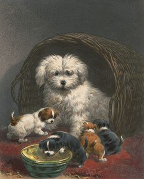 Vintage Digital Image of a Scotch Terrier Dog and Puppies #pvodmnEDAs8