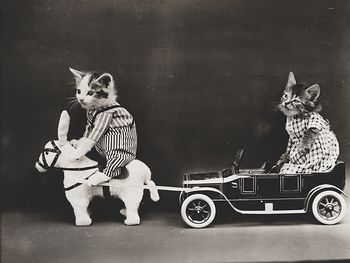 Vintage Digital Image of Kittens Posed Riding a Horse and Car #0yYZDp4evUY