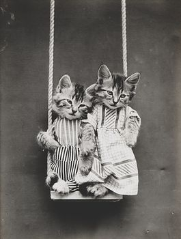 Vintage Digital Image of Kittens Swinging #7lJU4iHVRfk