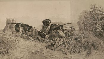 Vintage Digital Image of Pointer Dogs Hunting Grouse C 1895 #EaHiFwVLTMs