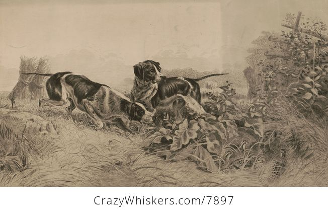 Vintage Digital Image of Pointer Dogs Hunting Grouse C 1895 - #EaHiFwVLTMs-1