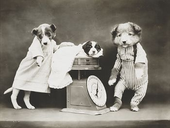 Vintage Digital Photo of a Puppy Dog Being Weighed #A7BAmoUKx7o