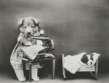 Vintage Digital Photo of a Puppy Dog Sewing #RVadpQhCBm8