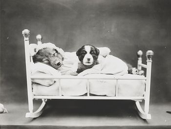 Vintage Digital Photo of a Puppy Dog Taking a Nap with Her Baby #BizYERpyiRU