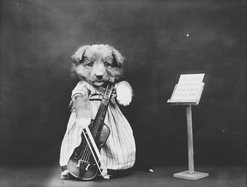 Vintage Digital Photo of a Puppy Dog with a Violin #SY4TWp7zxmw