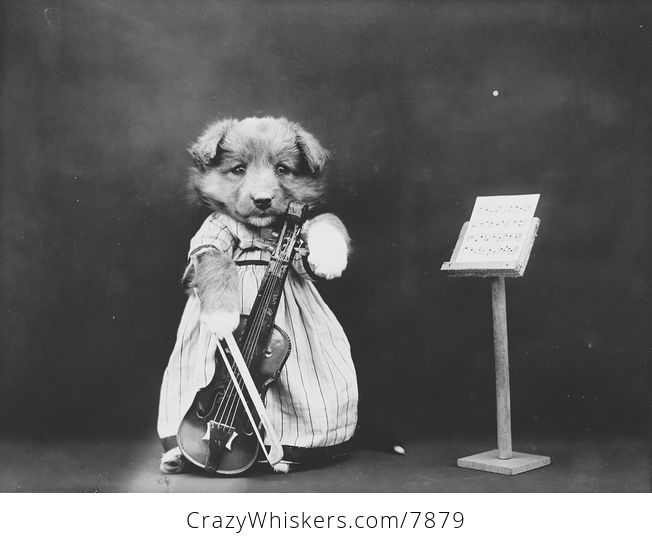Vintage Digital Photo of a Puppy Dog with a Violin - #SY4TWp7zxmw-1